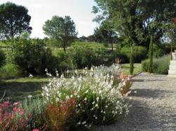 Gauras du jardin