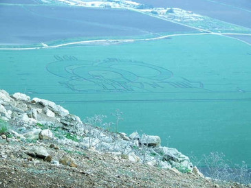 Crop Circles in the Harod Valley