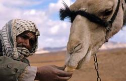 camel_feed (1)