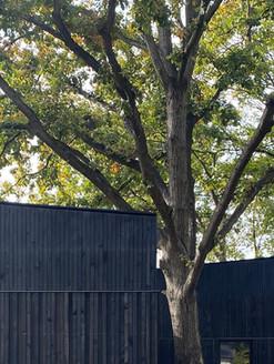 Oak Tree House, Blackheath