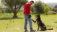 Matucan Servicios Caninos Educación