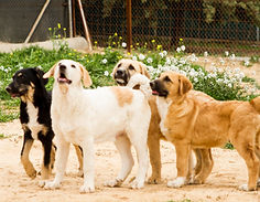 Cachorros Matucan Clayvision.jpg