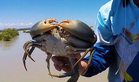 wild-mud-crab-catching_33ae09a0a83aef169