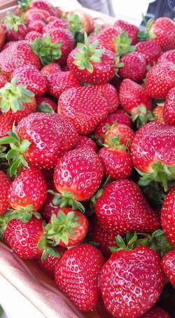 Strawberries 2017 - 1.jpg