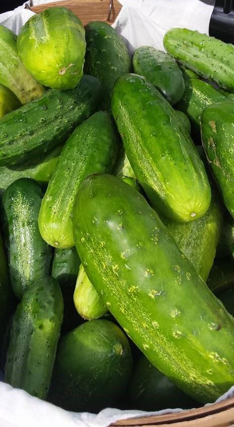 Cucumbers 2017 (2).jpg