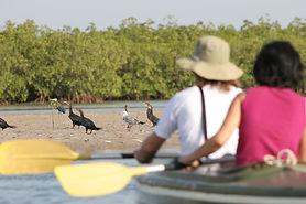 Birding dans le delta du Saloum au Sénég
