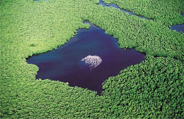 L'Ile aux oiseaux dans le delta du Salou