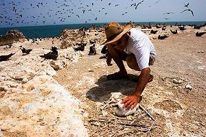 Birding aux îles madeleine au Sénégal