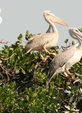 Birding en Casamance