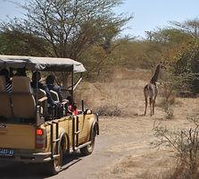 Safari à la réserve de Bandia au Sénégal