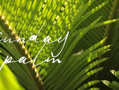 Palm's Sunday