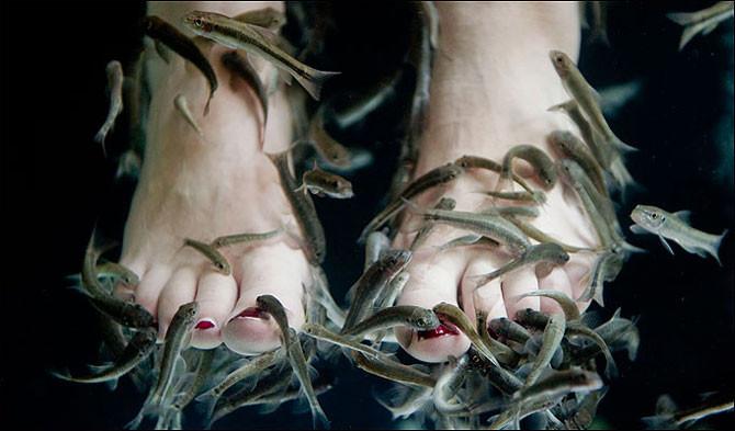Footspa fish garra ruffa