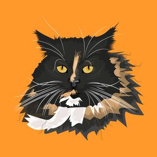 cat-web.jpg