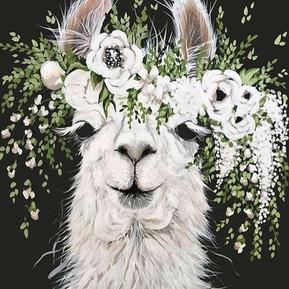 Lovely Llama's