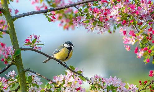 spring bird.webp