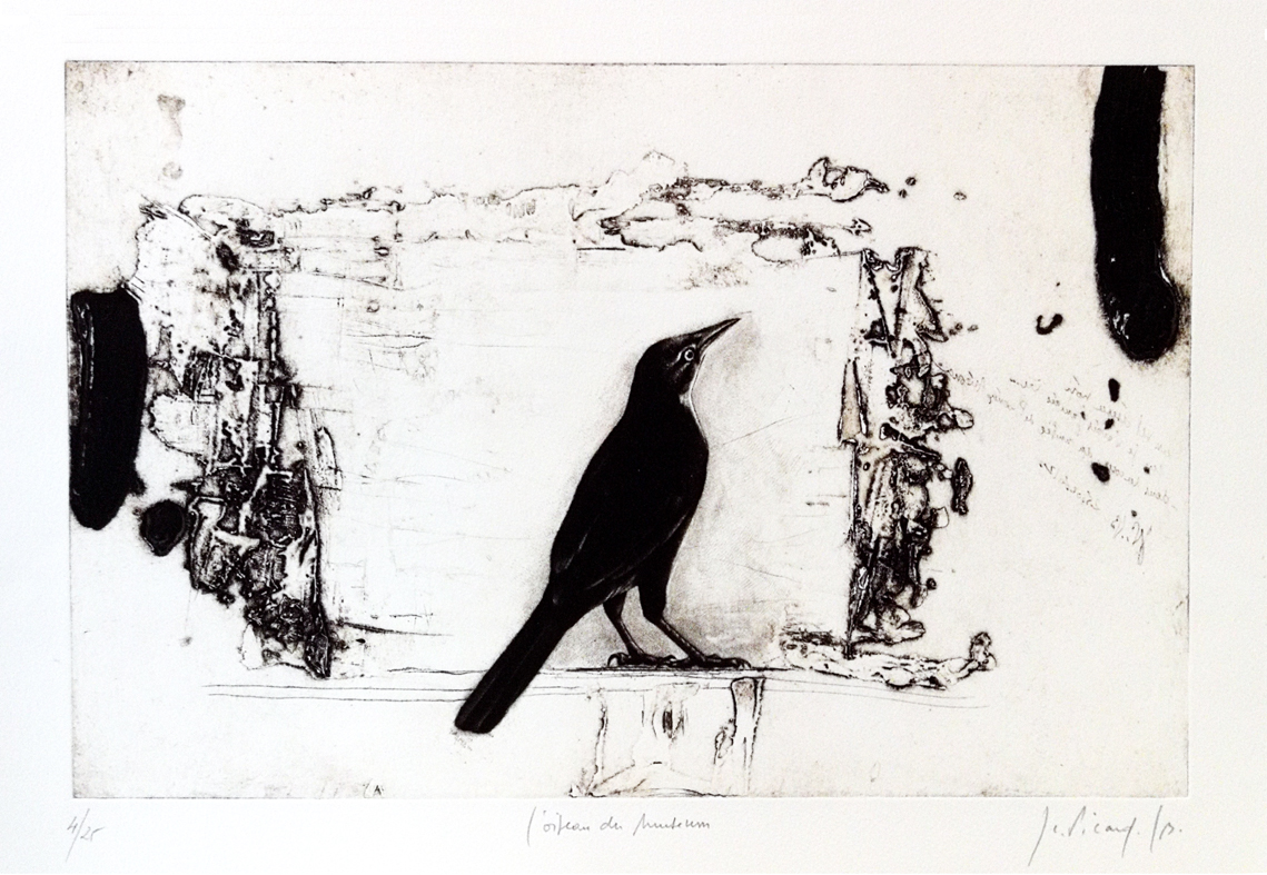 L'oiseau du Museum