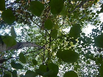 arvore na floresta