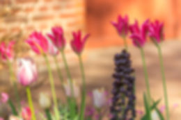 spring beauties.jpg