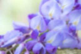 lilos.jpg