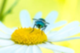 web-029458.jpg