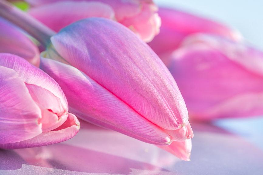 Tulpis.jpg