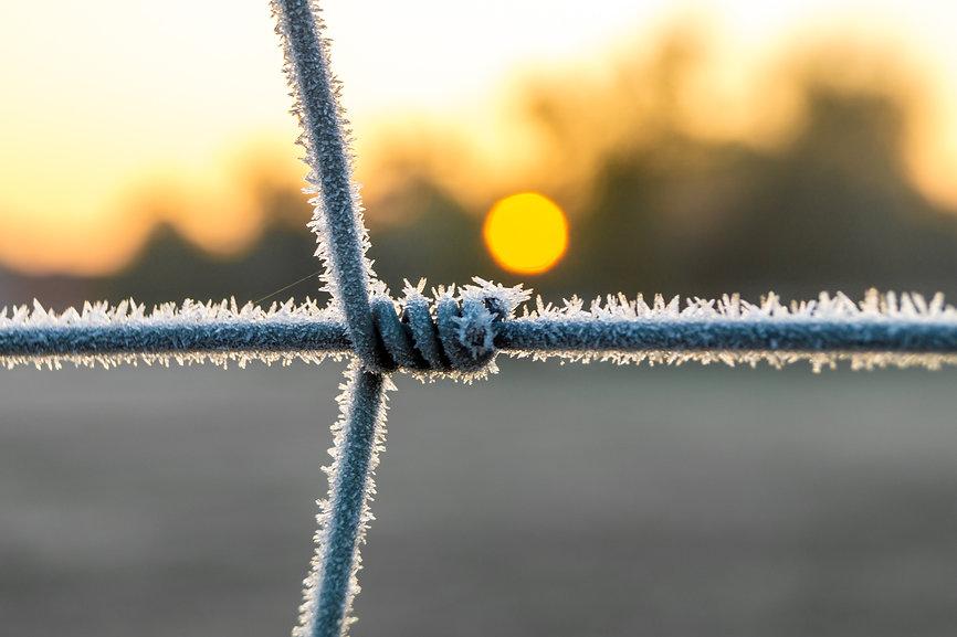 Frozen Fence.jpg