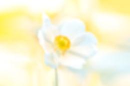 White Beauty.jpg
