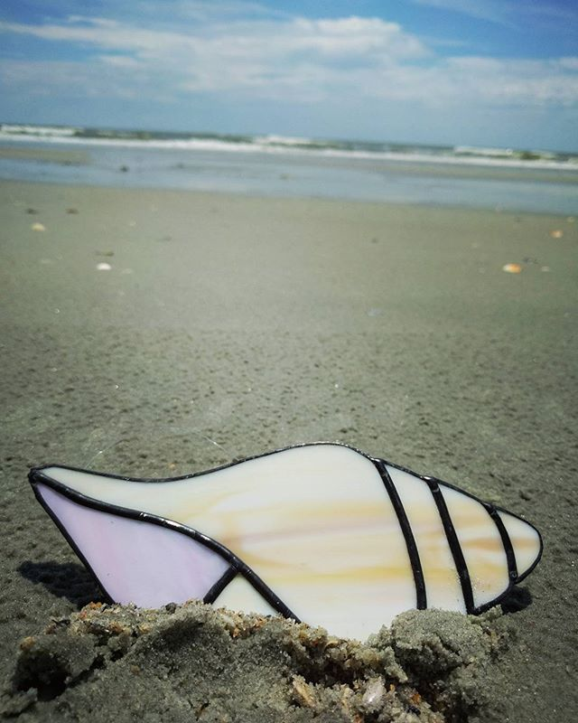 The shell got to visit her true home today!! Flash Sale - for 24 hours, this shell is discounted in
