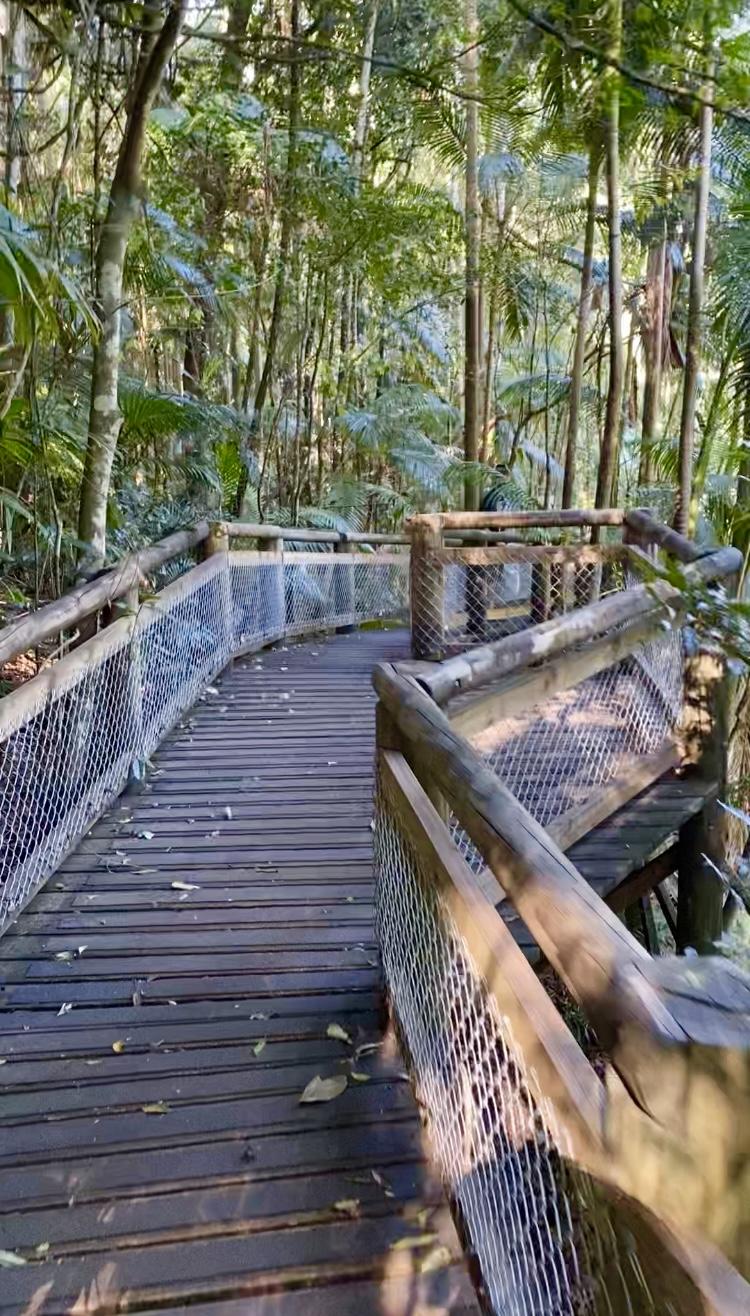 Rainforest Reserve