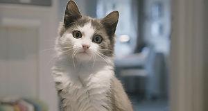 Cats-profilbilde.jpeg