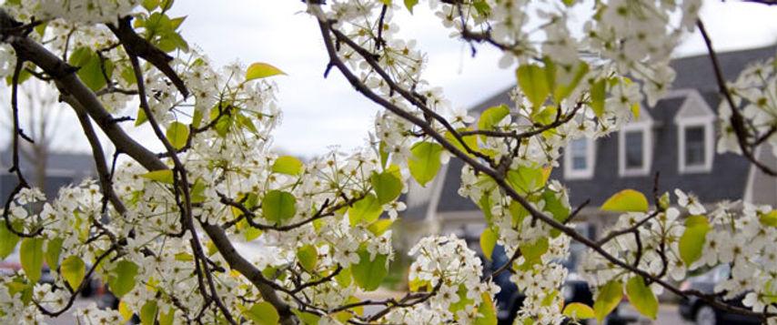 home-blossom.jpg