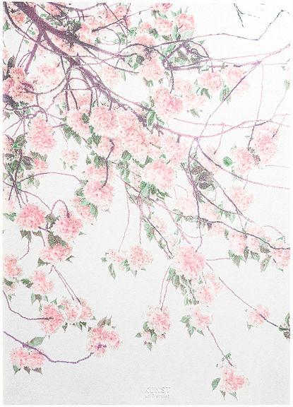 Kirschblühteni-2.jpg