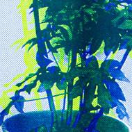 Blumenfenster I