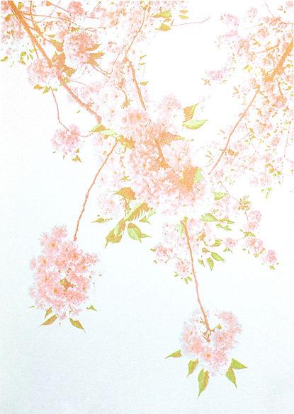 Kirschblühtenii-2.jpg