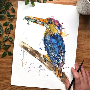 Dwarf Kingfisher