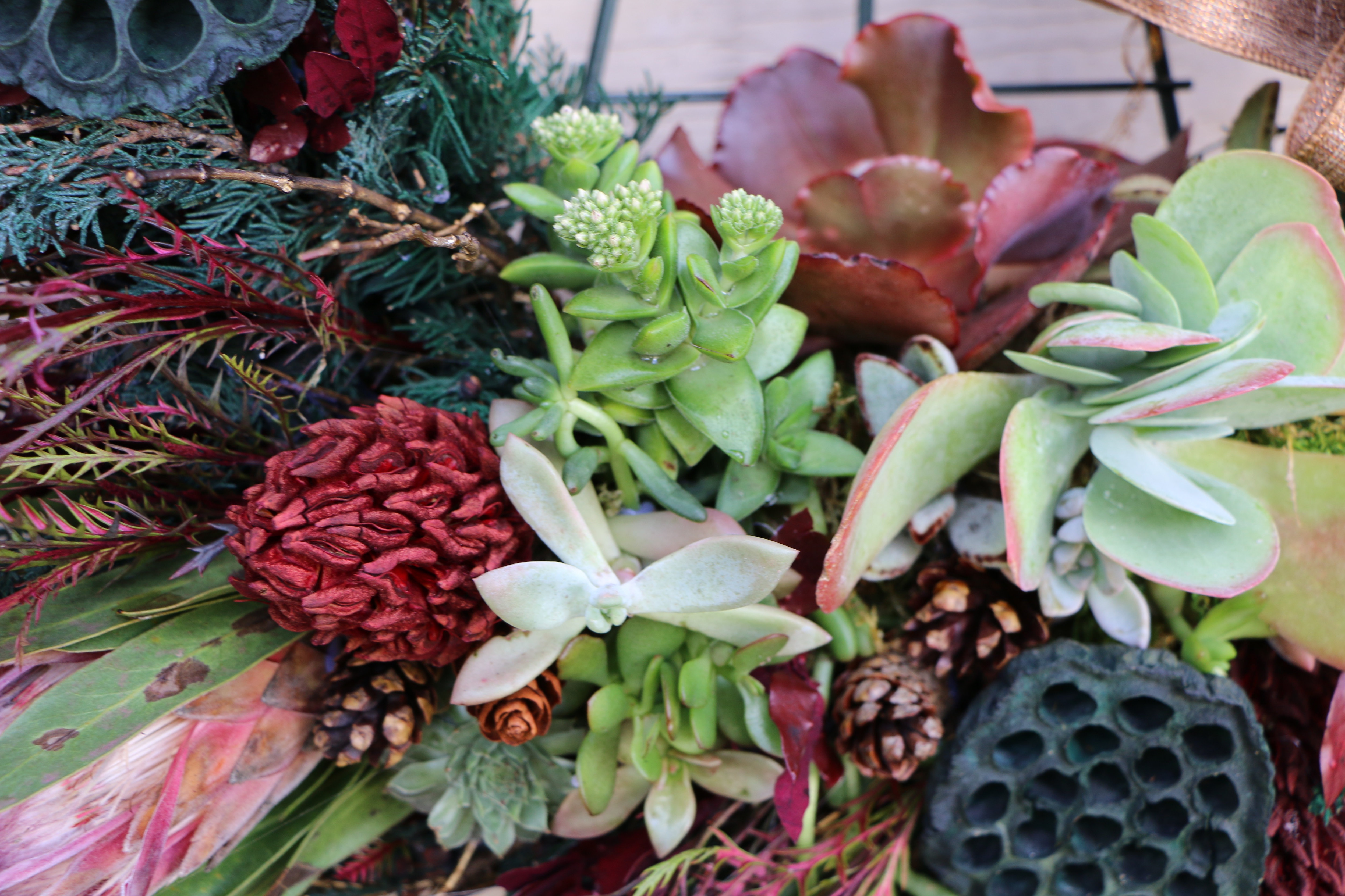 Holiday Living Succulent Wreath Workshop Wm Design House