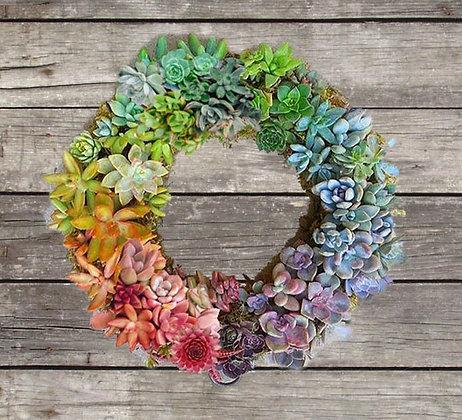 Colorful Succulent Wreath Workshop