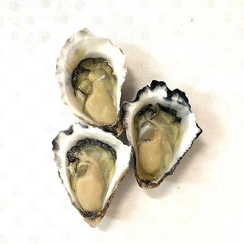 Rock Oysters Opened - Premium Merimbula