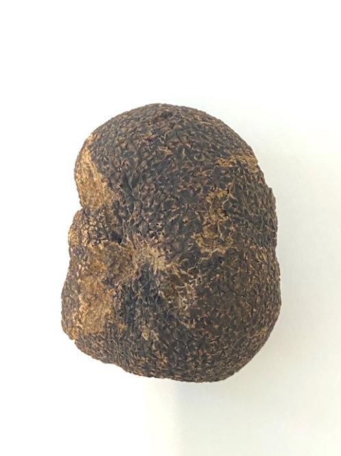**Jumbo** Yarra Valley Black Truffle - (50gm bundles)