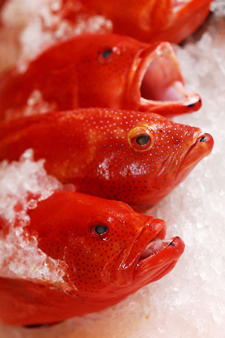 Coral Trout, Red Coral Seafood