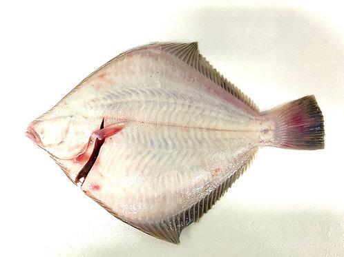 Flounder Whole - Plate Size