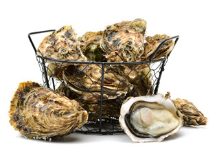 MARKET UPDATE - FRESH OYSTERS