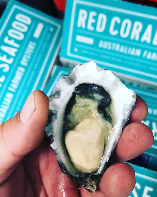 Oysters, Red Coral Seafood