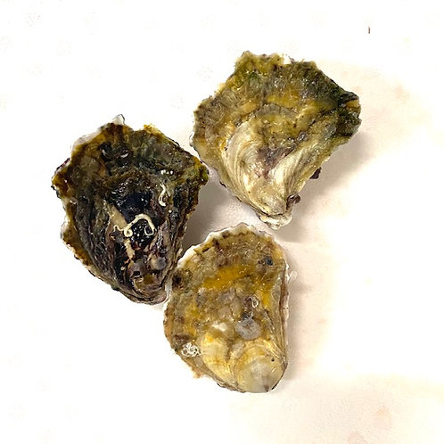 Closed - Premium Rock Oysters Merimbula NSW