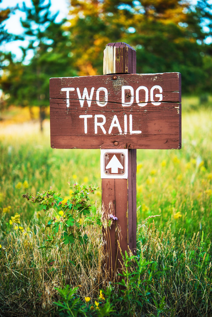two dog trail.jpg