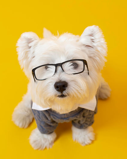 cute-little-dog-impersonating-business-p