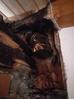 Ripristino canna fumaria incendiata, con la nuova linea di prodotti ZIRCOFOAM