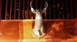 Deer Bar