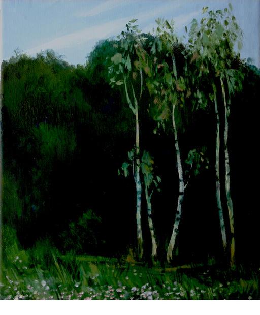 Wald mit Birken