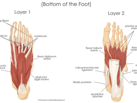 The Core Muscles of the Foot